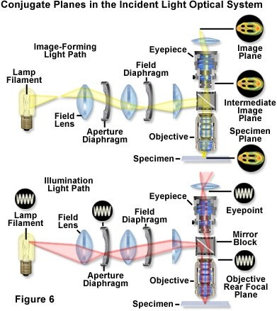 what function is performed by the diaphragm of a microscope?