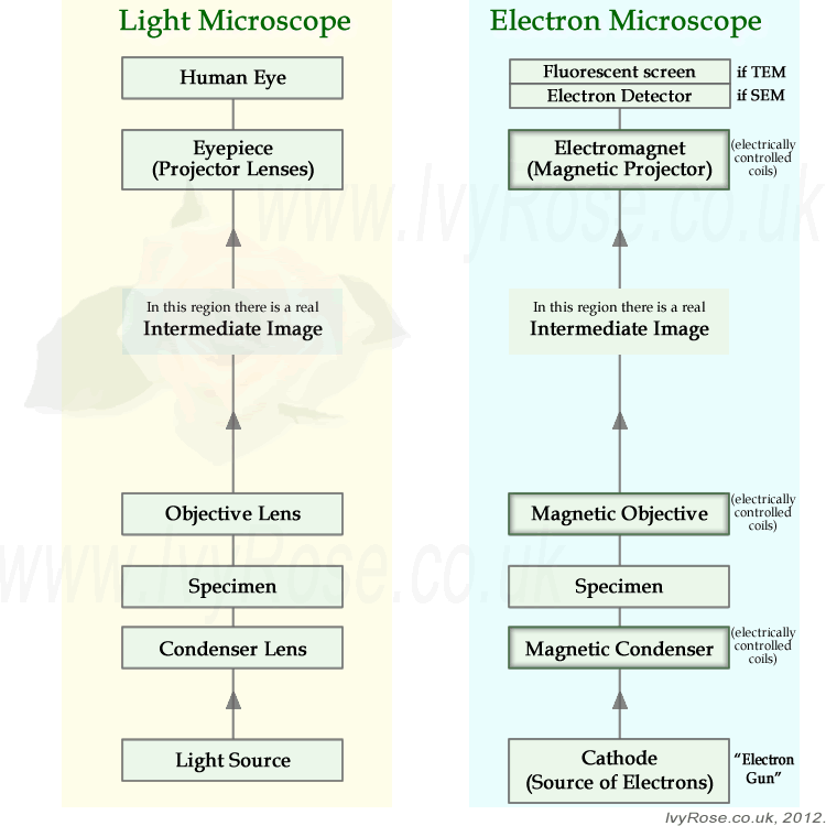 microscope magnification diagram choice image