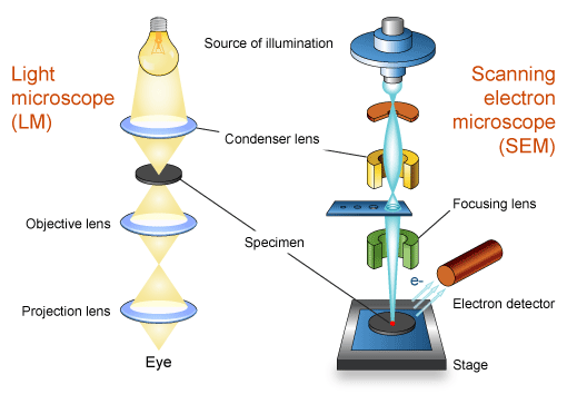 what are the differences between light microscopes and electron microscopes
