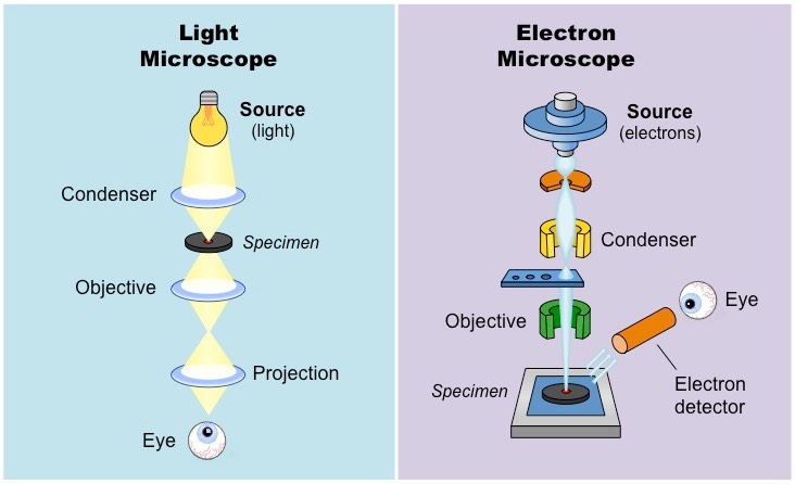 the differences between a light and electron microscope Similarities between light and electron microscopes (essay sample) october 10, 2017 by admin essay samples, free essay samples facebook 0 twitter 0 google+ 0 viber whatsapp.