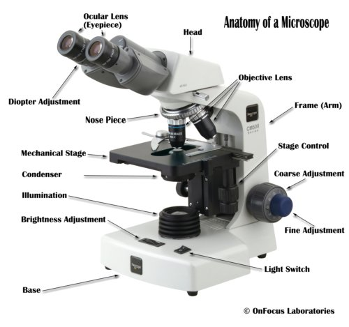 which microscope can be linked to an x ray analyzer