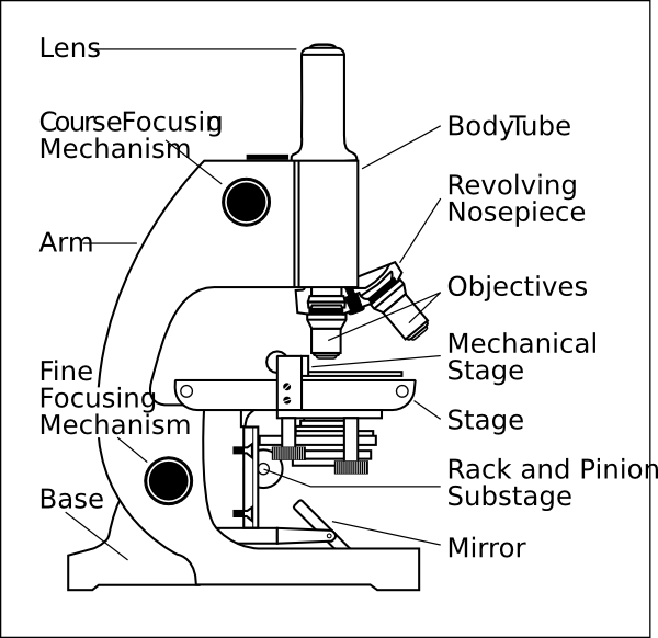 which parts of a microscope regulate the amount of light?