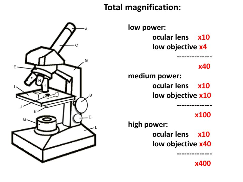 What is the use of low power objective in microscope the standard laboratory microscope is outfitted with an ocular lens that provides a magnification power of 10x the total magnification power can be found ccuart Choice Image