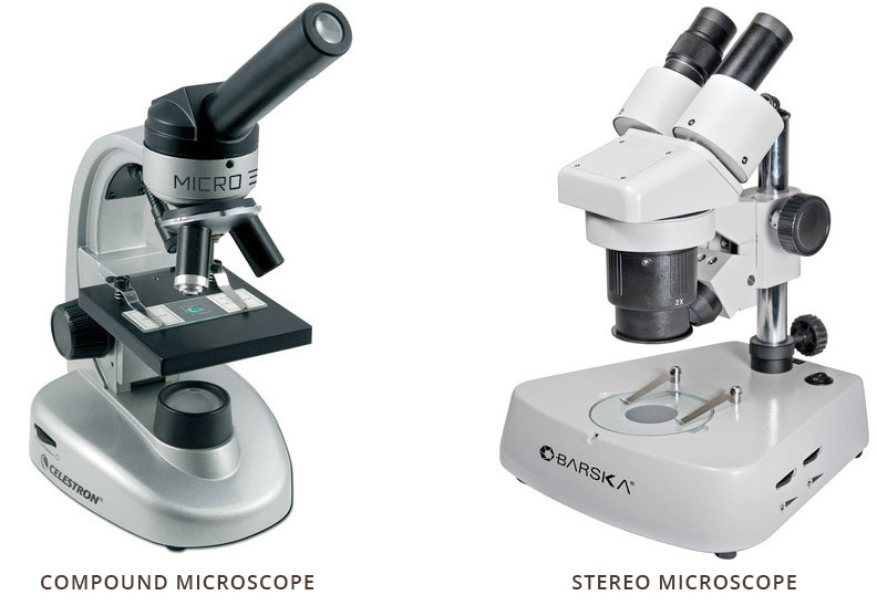 Simple compound microscope diagram ccuart