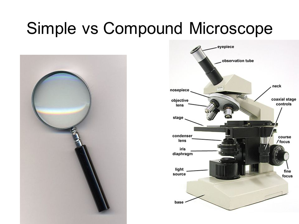 objectives microscope Objectives are the most important and complex imaging component in an optical microscope this discussion explores some of the specialized microscope objectives that have been designed to perform unique tasks in optical microscopy.