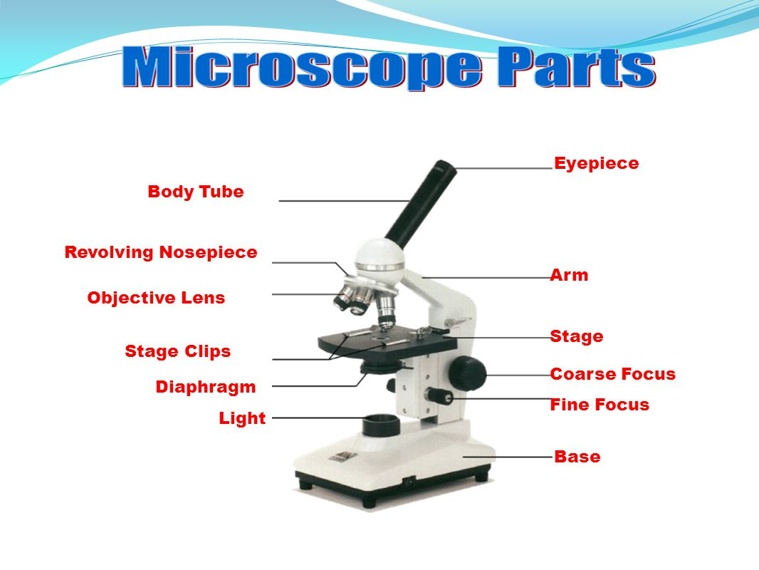how does the lens of a light microscope work