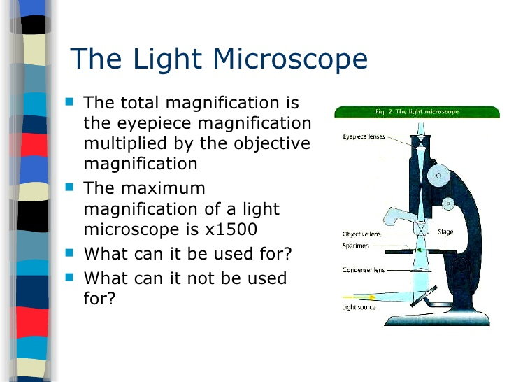 total magnification of a light microscope is achieved when