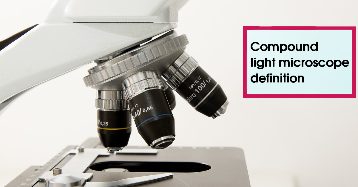 The compound light microscope is most useful for viewing